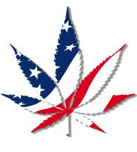 Marijuana Use Legal In Nearly Half Of States