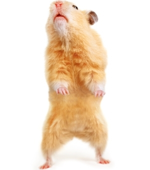 Dancing Hamster Arrested On Insurance Fraud Charges